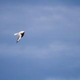 Seagull No. 2